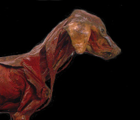 Domestic Animal Anatomy Collection
