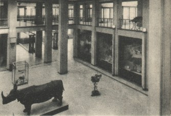 Historical picture of the entrance hall of the Museum of Zoology in the 30s
