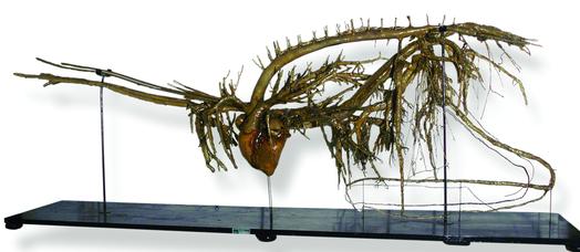 Sistema arterioso e venoso del cavallo preparato a secco, Catalogo Papi, 1900