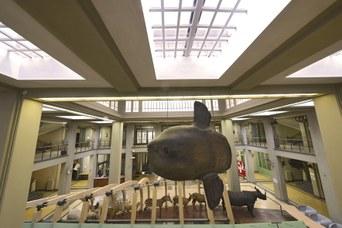 Atrio del Museo di Zoologia