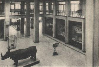 Foto storica dell'atrio del Museo di Zoologia - anni '30