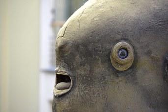Esemplare di Pesce Luna (Mola mola) - Particolare
