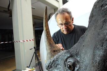 Particolare del Rinoceronte Indiano durante il restauro - Tonalizzazione del corno in gesso con colori a tempera e acrilici