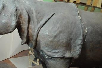 Particolare del Rinoceronte Indiano durante il restauro