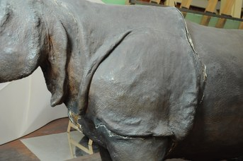 Particolare del Rinoceronte Indiano prima del restauro