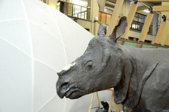 Rinoceronte Indiano dopo il furto del corno