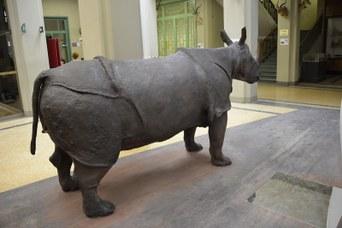 Rinoceronte Indiano dopo il restauro