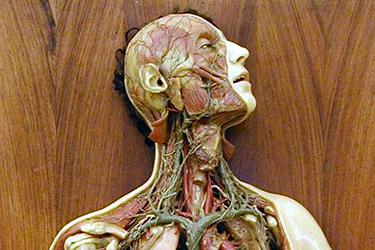 Viaggio dentro il corpo umano - Visita guidata