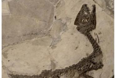 Dinosauri italiani: istruzioni per l'uso - Conferenza