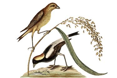 Il punto di vista botanico in chicchi, grani e farine