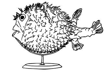 Disegno pesce palla
