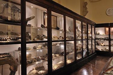 Visite guidate tematiche alla Collezione di Geologia