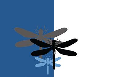 Africa: a tavola con gli insetti