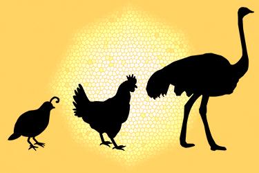 Caccia all'uovo! - Laboratorio didattico