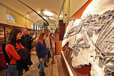 Visite guidate ai Musei e alle Collezioni Universitarie