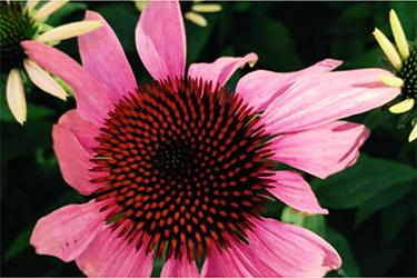 Visite guidate di luglio all'Orto Botanico