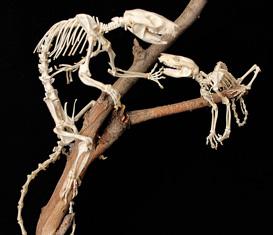 Collezione di Anatomia Comparata