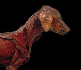 Collezione di Anatomia degli Animali Domestici