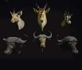 Collezione di Zoologia