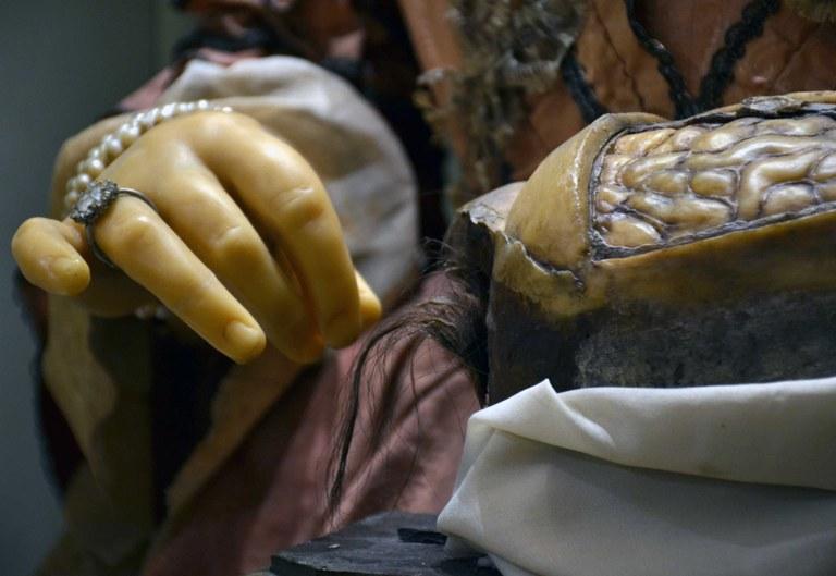 Particolare del busto in cera di Anna Morandi nell'atto di sezionare un cervello
