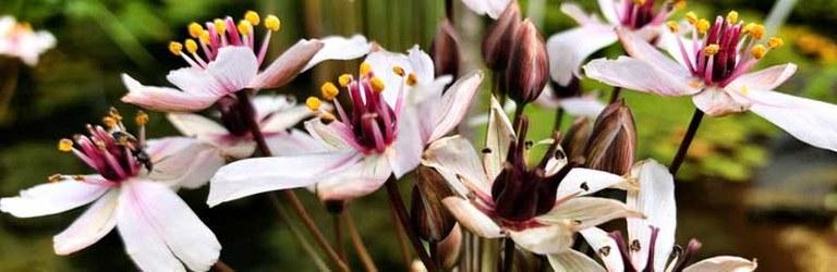 Fiori dell'Orto Botanico