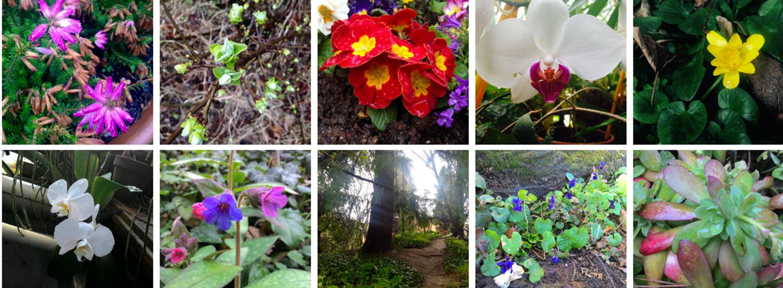 Fiori orto botanico