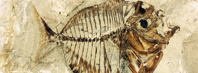 Particolare del Museo Capellini
