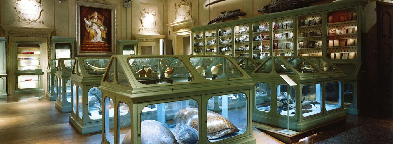 Sala Aldrovandi - Museo di Palazzo Poggi